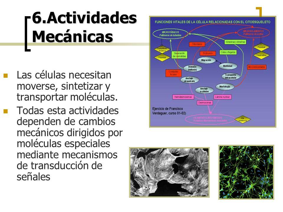 6.Actividades Mecánicas