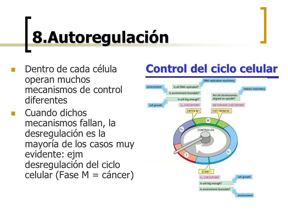 8.Autoregulación Control del ciclo celular