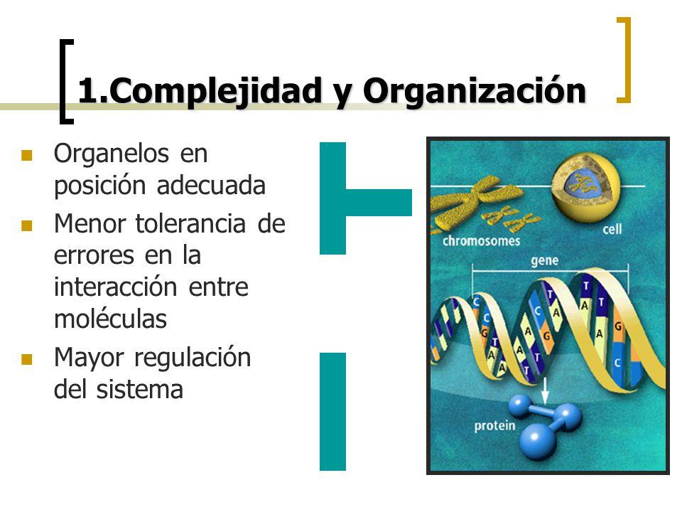 1.Complejidad y Organización