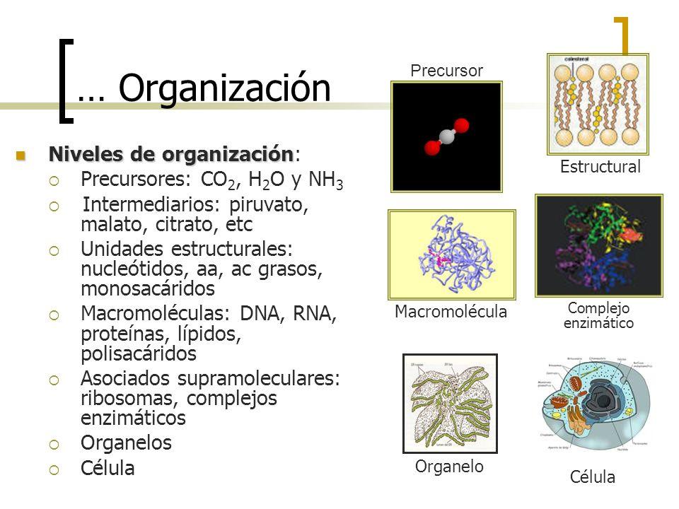 … Organización Niveles de organización: Precursores: CO2, H2O y NH3