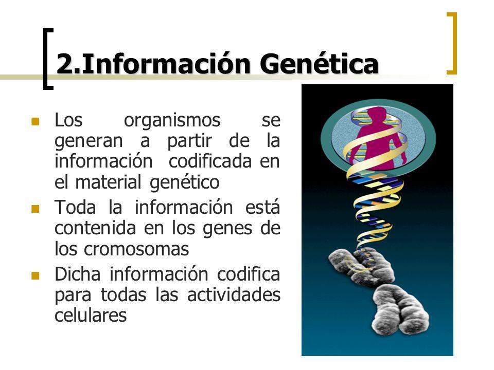 2.Información Genética Los organismos se generan a partir de la información codificada en el material genético.