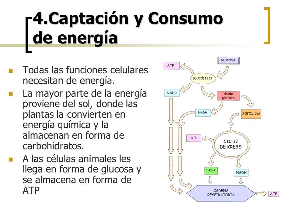 4.Captación y Consumo de energía