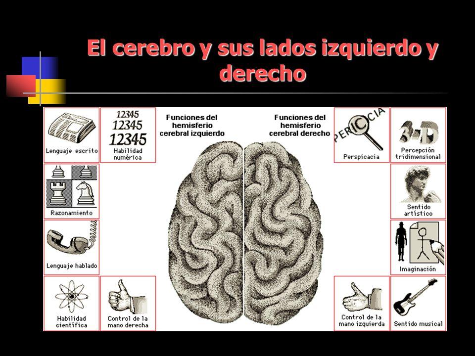 El cerebro y sus lados izquierdo y derecho