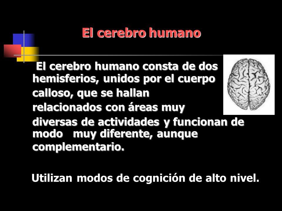 El cerebro humano consta de dos hemisferios, unidos por el cuerpo