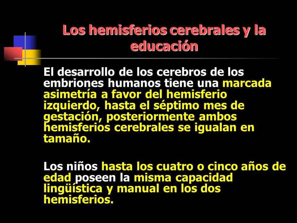 Los hemisferios cerebrales y la educación