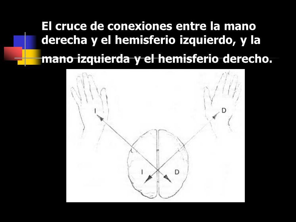 El cruce de conexiones entre la mano derecha y el hemisferio izquierdo, y la mano izquierda y el hemisferio derecho.