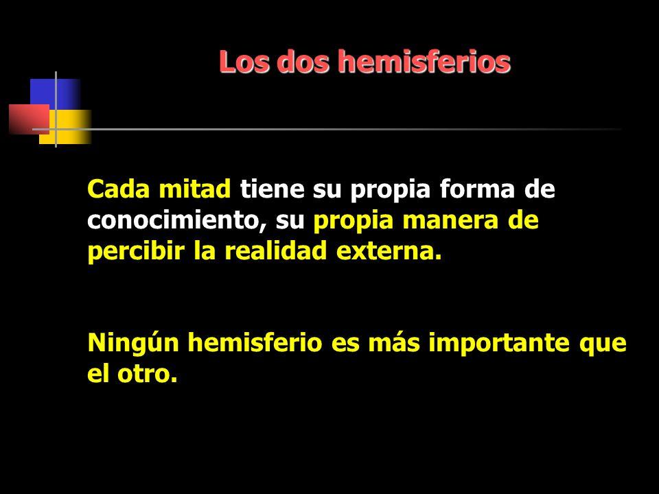 Los dos hemisferios Cada mitad tiene su propia forma de