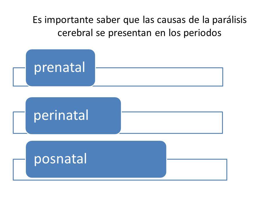 Es importante saber que las causas de la parálisis cerebral se presentan en los periodos