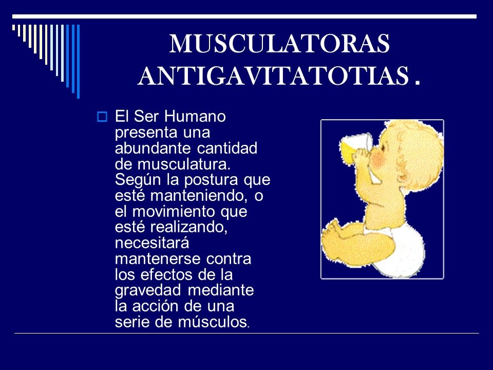 MUSCULATORAS ANTIGAVITATOTIAS .