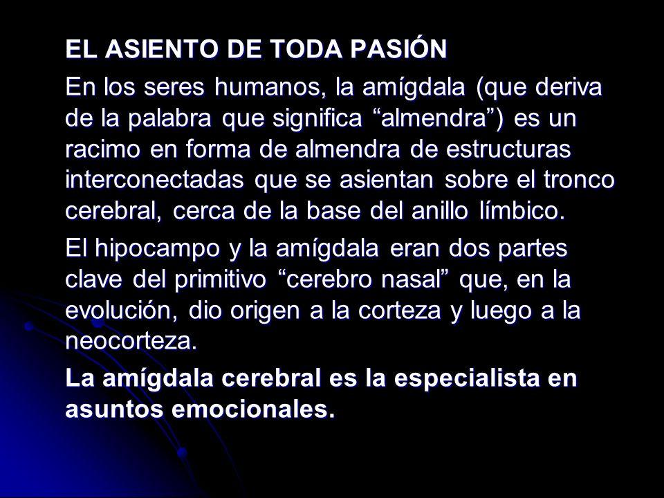 EL ASIENTO DE TODA PASIÓN