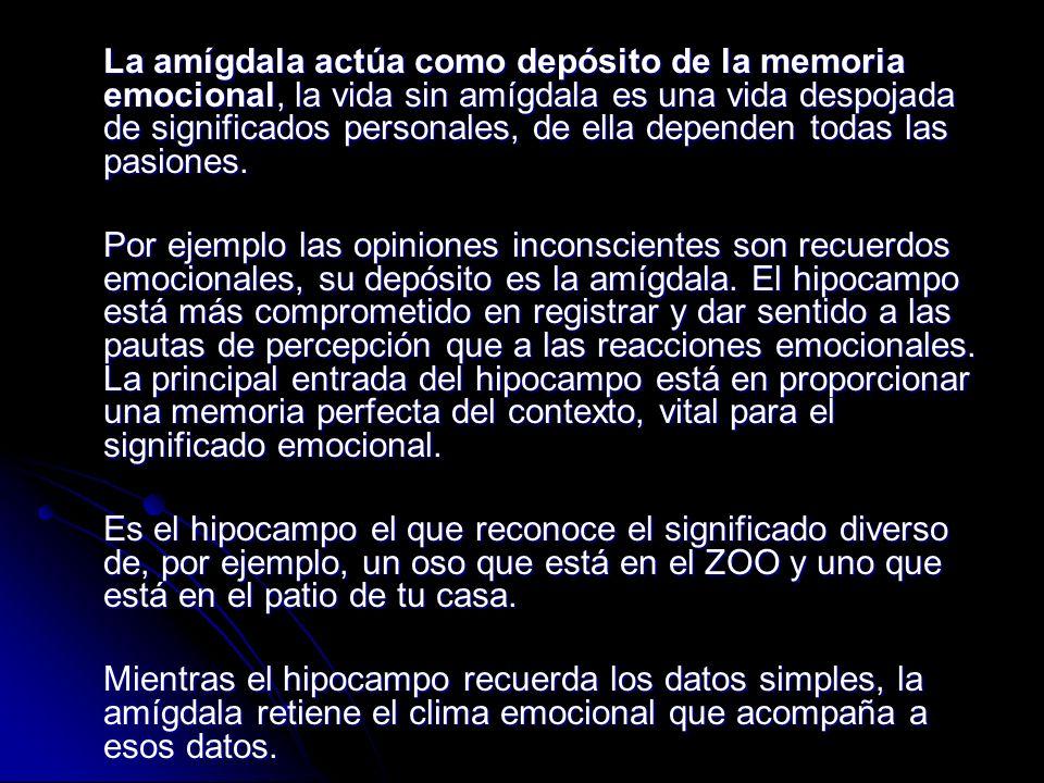 La amígdala actúa como depósito de la memoria emocional, la vida sin amígdala es una vida despojada de significados personales, de ella dependen todas las pasiones.