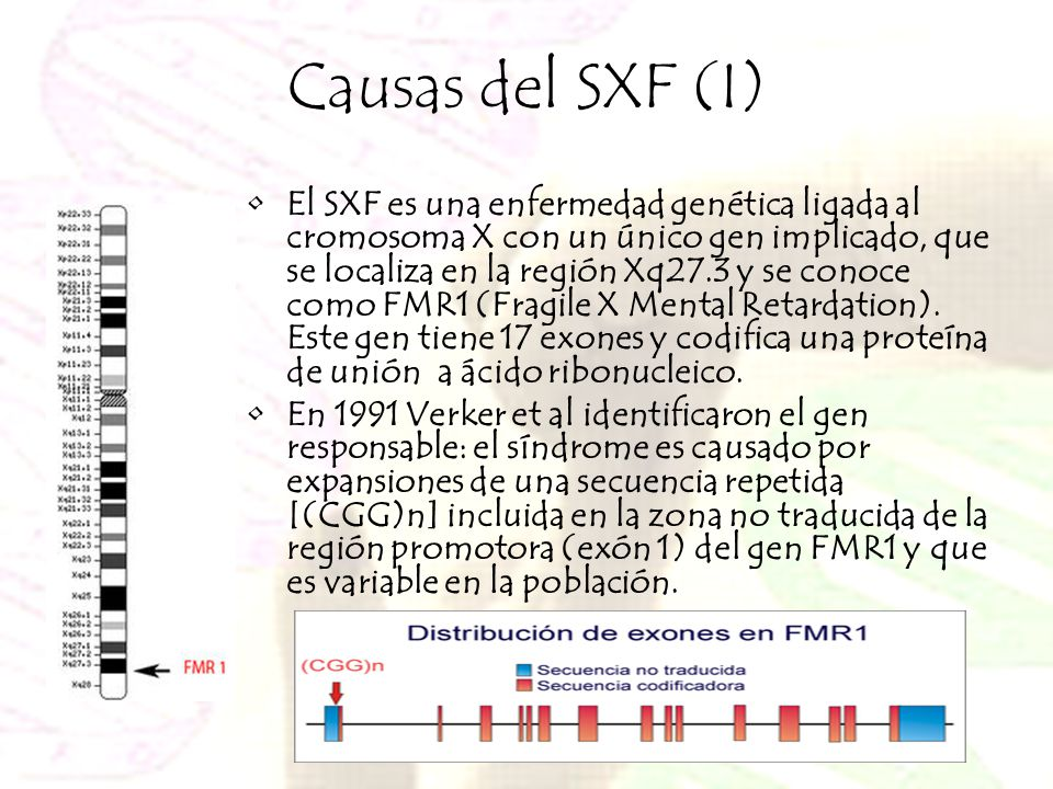 Causas del SXF (I)