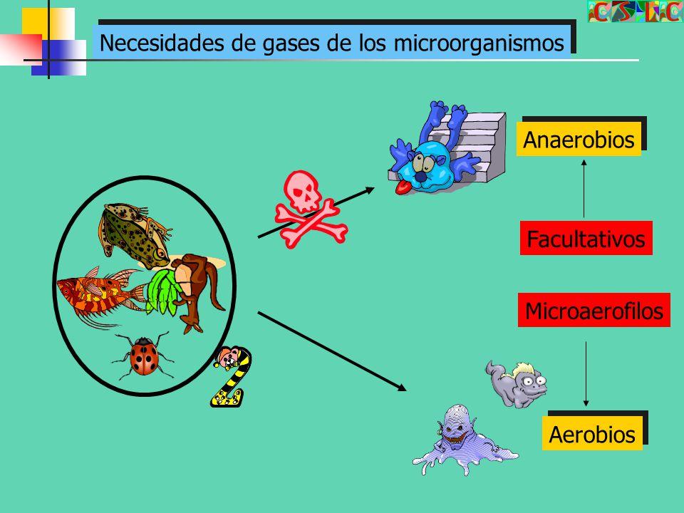 Necesidades de gases de los microorganismos