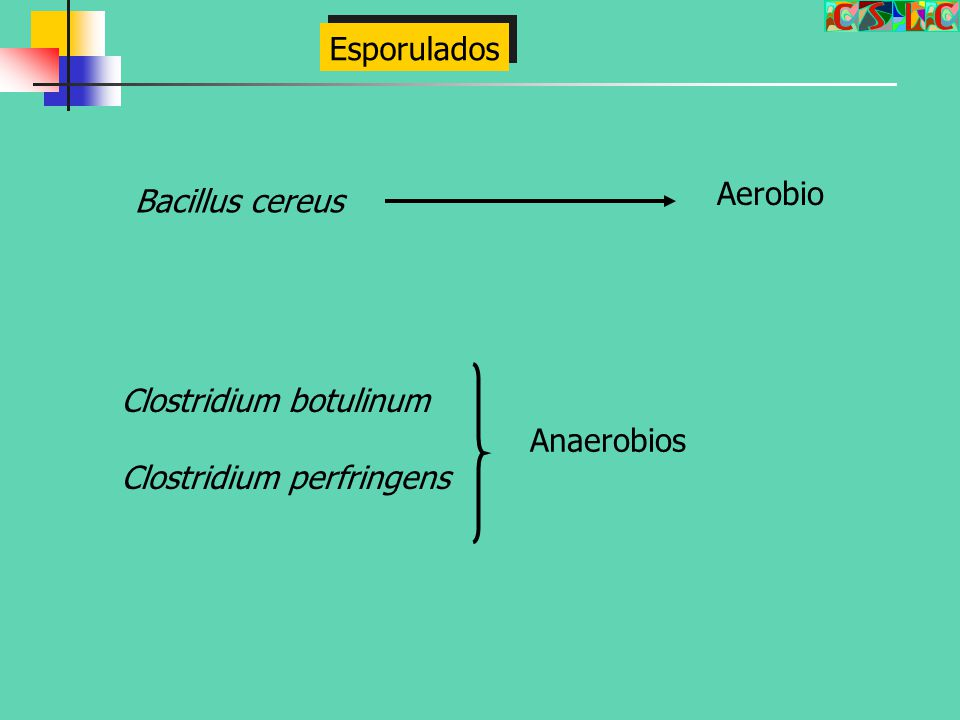 Esporulados Aerobio Bacillus cereus Clostridium botulinum Clostridium perfringens Anaerobios