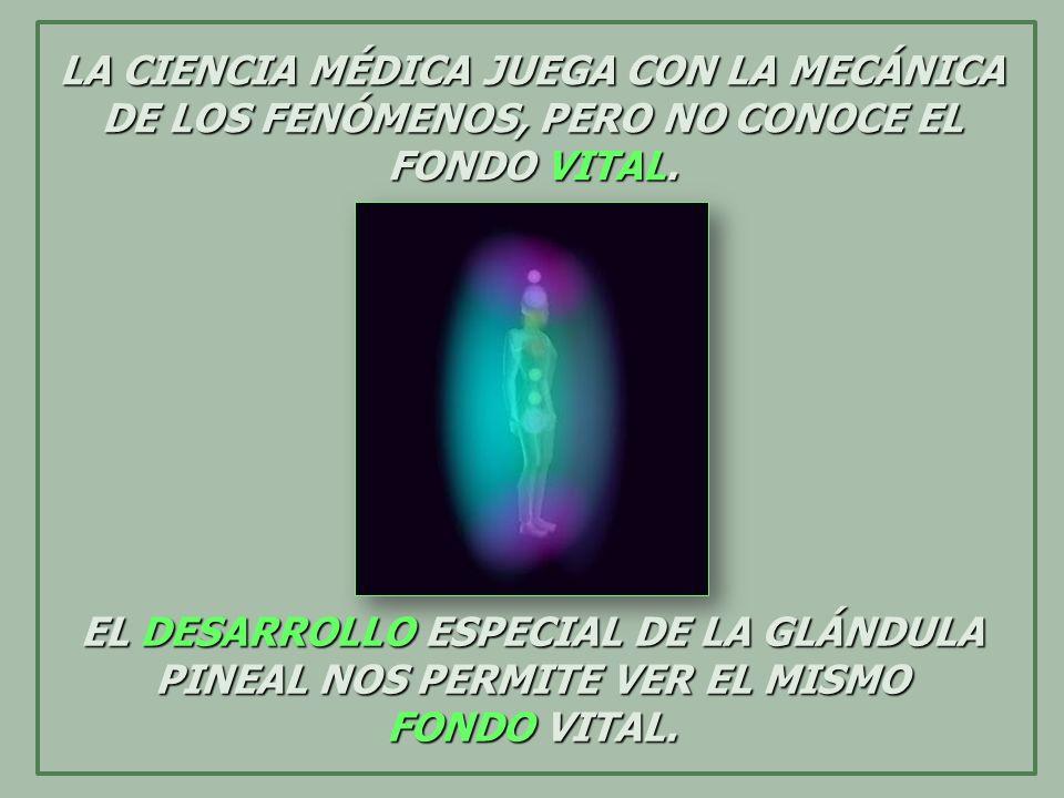 EL DESARROLLO ESPECIAL DE LA GLÁNDULA PINEAL NOS PERMITE VER EL MISMO