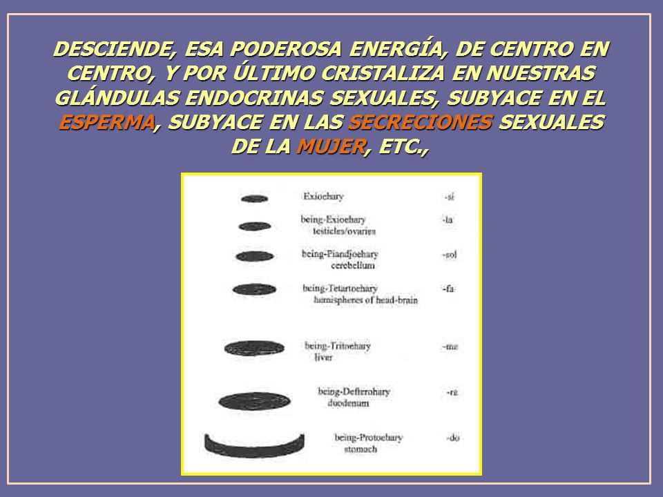 DESCIENDE, ESA PODEROSA ENERGÍA, DE CENTRO EN CENTRO, Y POR ÚLTIMO CRISTALIZA EN NUESTRAS GLÁNDULAS ENDOCRINAS SEXUALES, SUBYACE EN EL ESPERMA, SUBYACE EN LAS SECRECIONES SEXUALES
