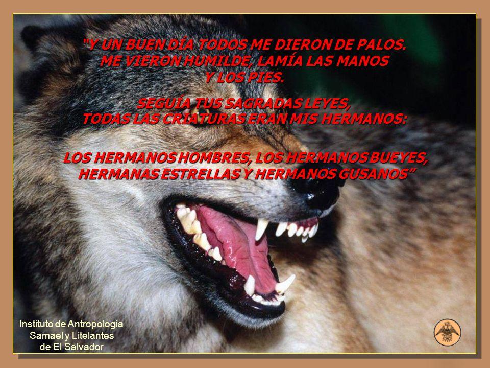 SEGUÍA TUS SAGRADAS LEYES, TODAS LAS CRIATURAS ERAN MIS HERMANOS: