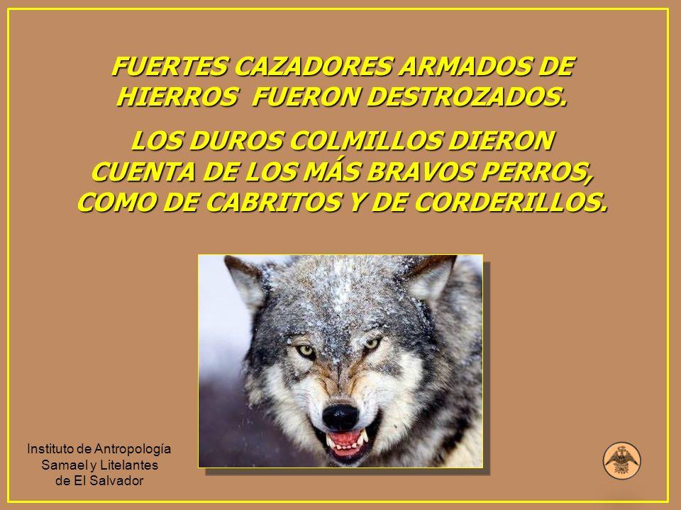 FUERTES CAZADORES ARMADOS DE HIERROS FUERON DESTROZADOS.