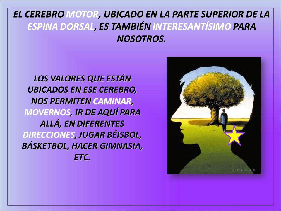 EL CEREBRO MOTOR, UBICADO EN LA PARTE SUPERIOR DE LA ESPINA DORSAL, ES TAMBIÉN INTERESANTÍSIMO PARA NOSOTROS.