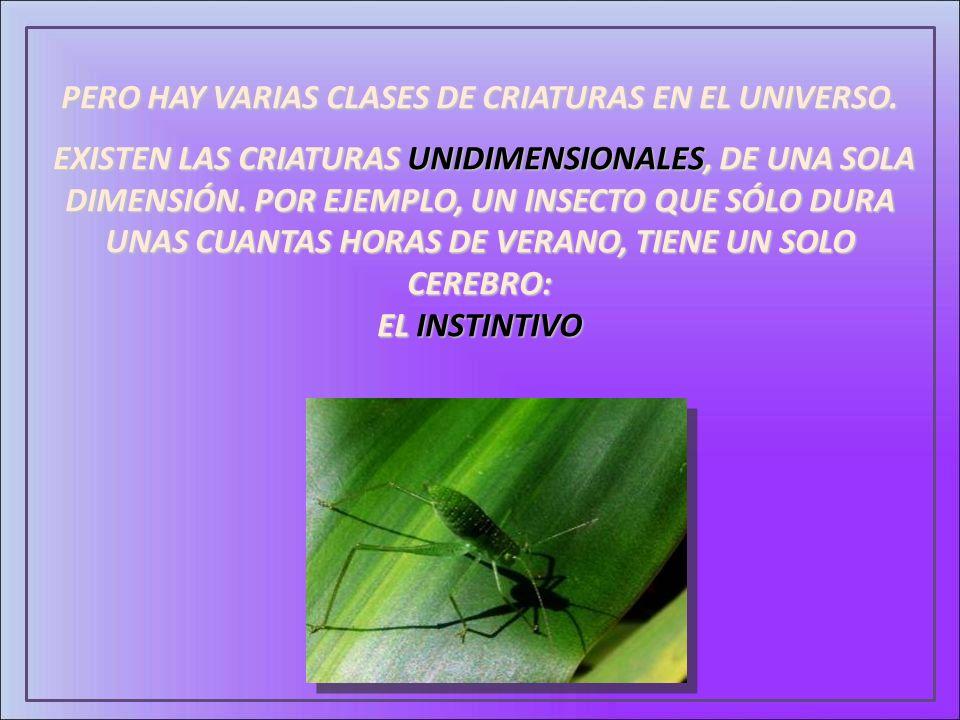 PERO HAY VARIAS CLASES DE CRIATURAS EN EL UNIVERSO.