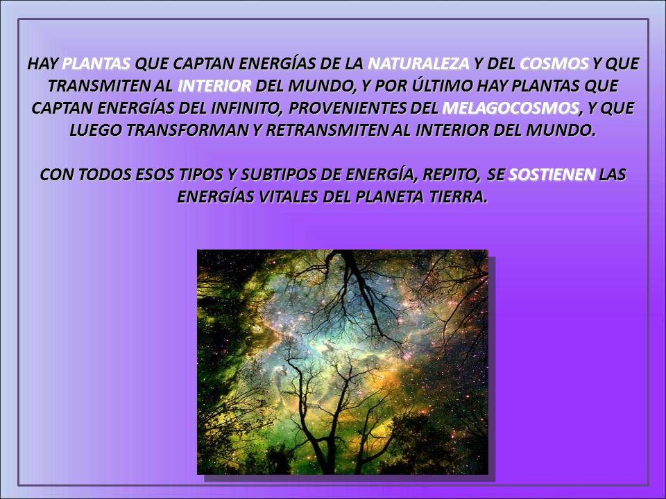 HAY PLANTAS QUE CAPTAN ENERGÍAS DE LA NATURALEZA Y DEL COSMOS Y QUE TRANSMITEN AL INTERIOR DEL MUNDO, Y POR ÚLTIMO HAY PLANTAS QUE CAPTAN ENERGÍAS DEL INFINITO, PROVENIENTES DEL MELAGOCOSMOS, Y QUE LUEGO TRANSFORMAN Y RETRANSMITEN AL INTERIOR DEL MUNDO.
