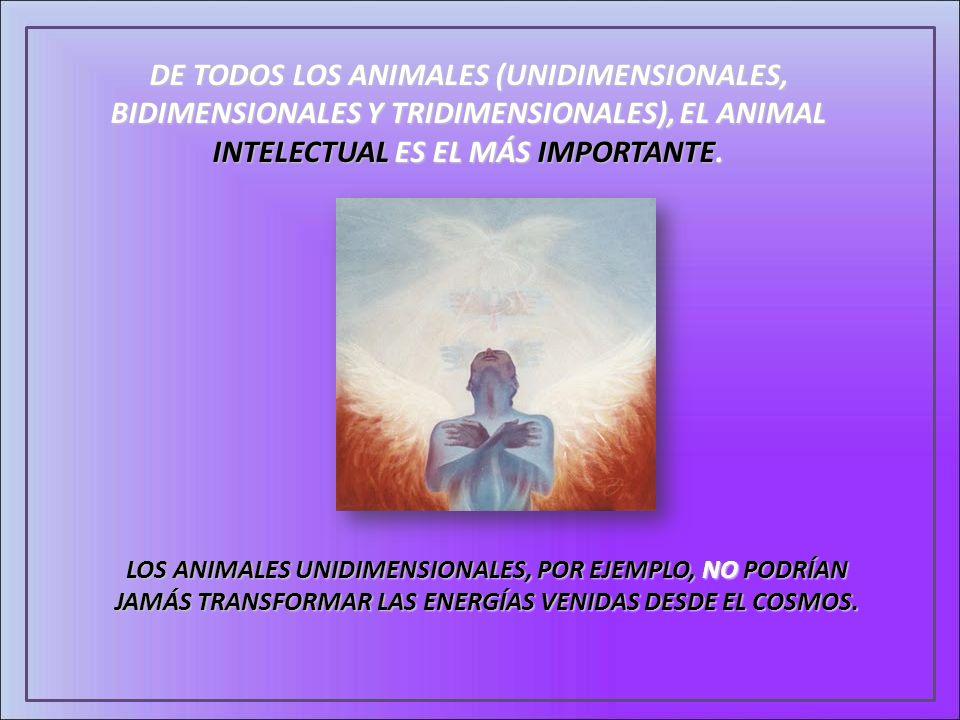 DE TODOS LOS ANIMALES (UNIDIMENSIONALES, BIDIMENSIONALES Y TRIDIMENSIONALES), EL ANIMAL INTELECTUAL ES EL MÁS IMPORTANTE.