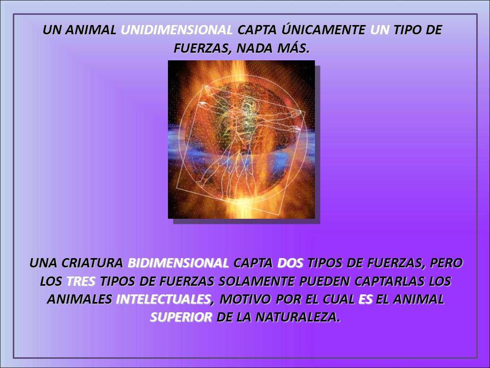 UN ANIMAL UNIDIMENSIONAL CAPTA ÚNICAMENTE UN TIPO DE FUERZAS, NADA MÁS.