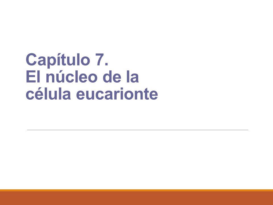 Capítulo 7. El núcleo de la célula eucarionte