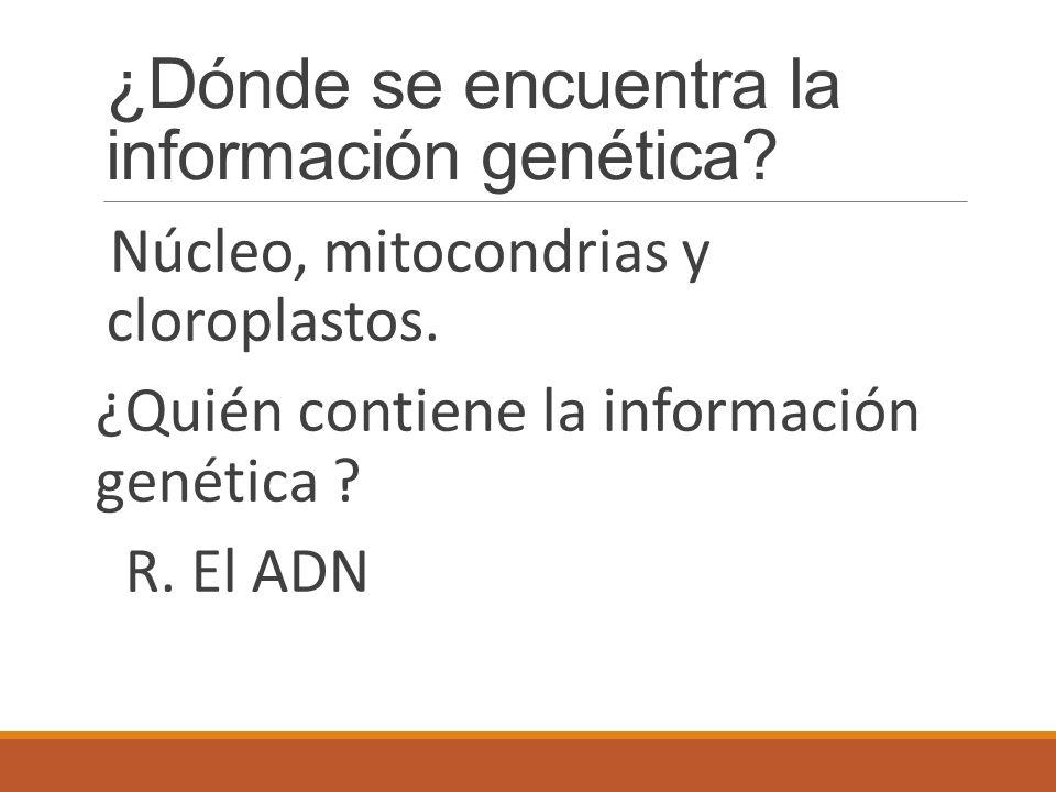 ¿Dónde se encuentra la información genética