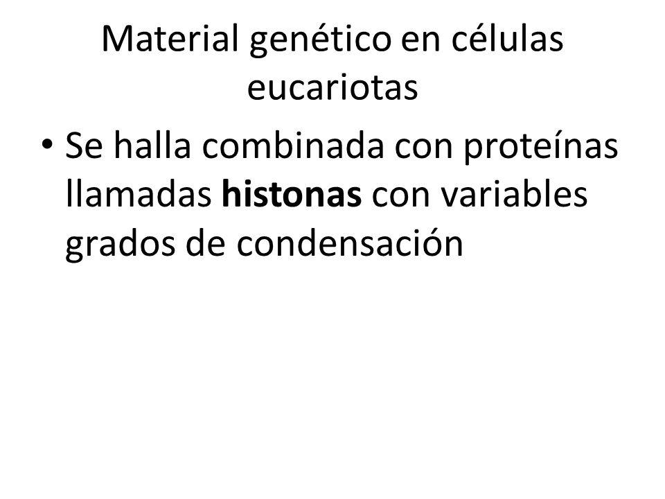 Material genético en células eucariotas