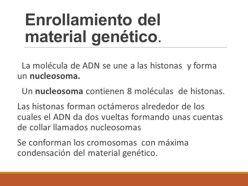 Enrollamiento del material genético.