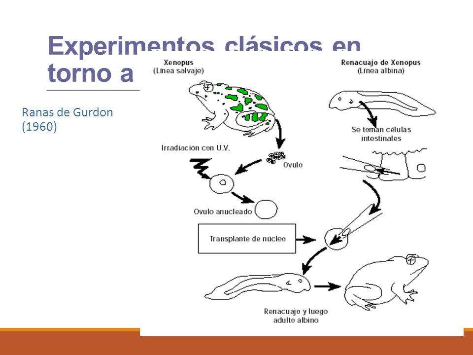 Experimentos clásicos en torno a mitosis