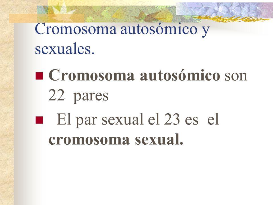 Cromosoma autosómico y sexuales.