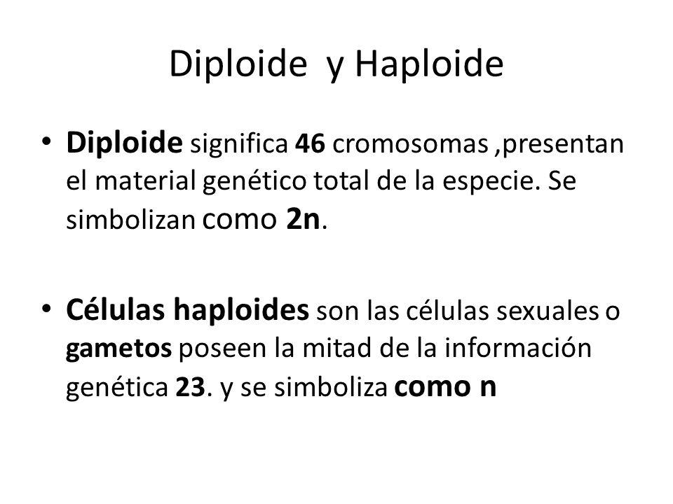 Diploide y Haploide Diploide significa 46 cromosomas ,presentan el material genético total de la especie. Se simbolizan como 2n.