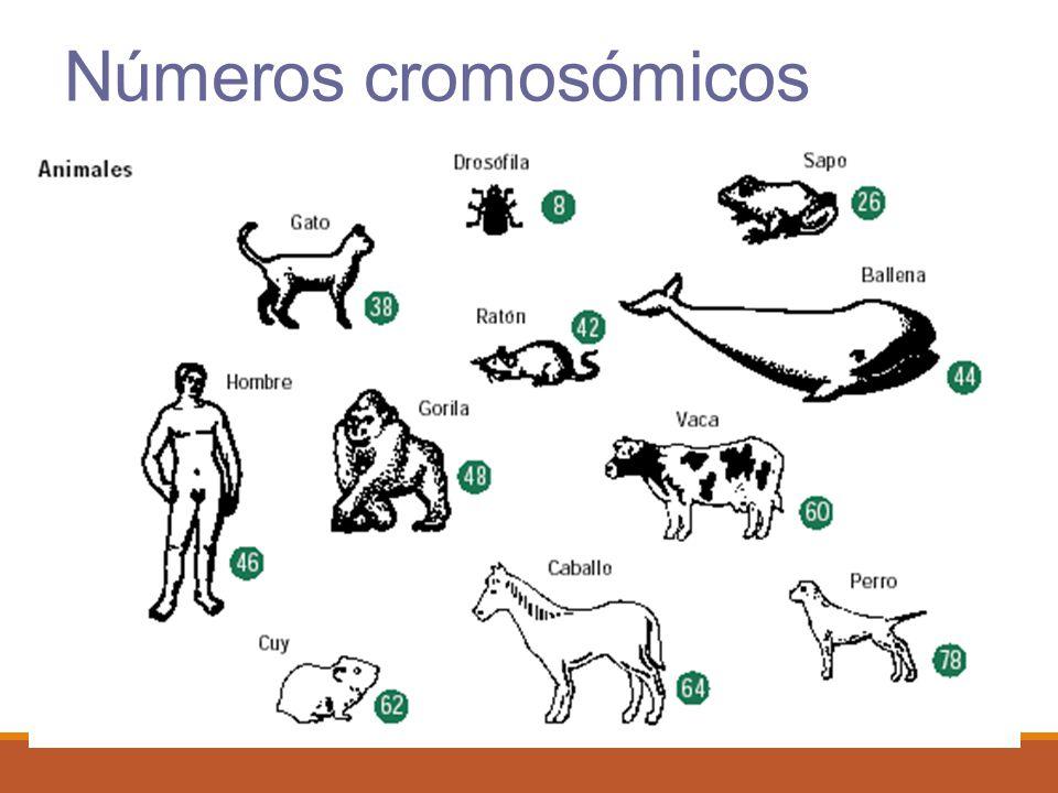 Números cromosómicos