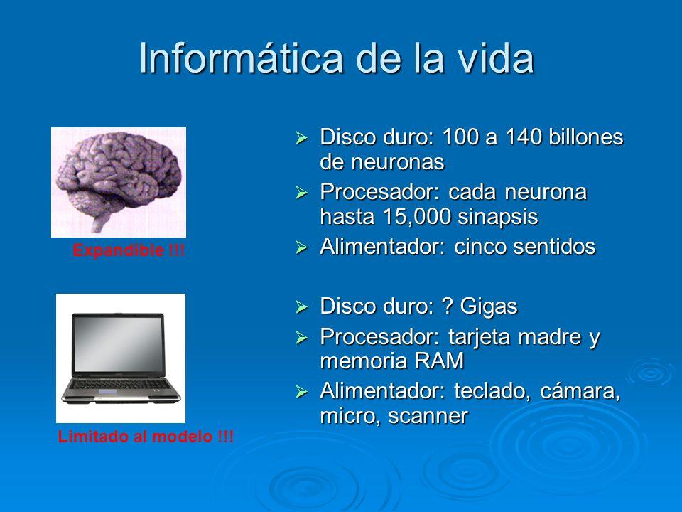 Informática de la vida Disco duro: 100 a 140 billones de neuronas .