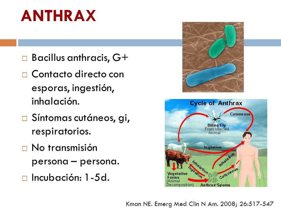 ANTHRAX Bacillus anthracis, G+