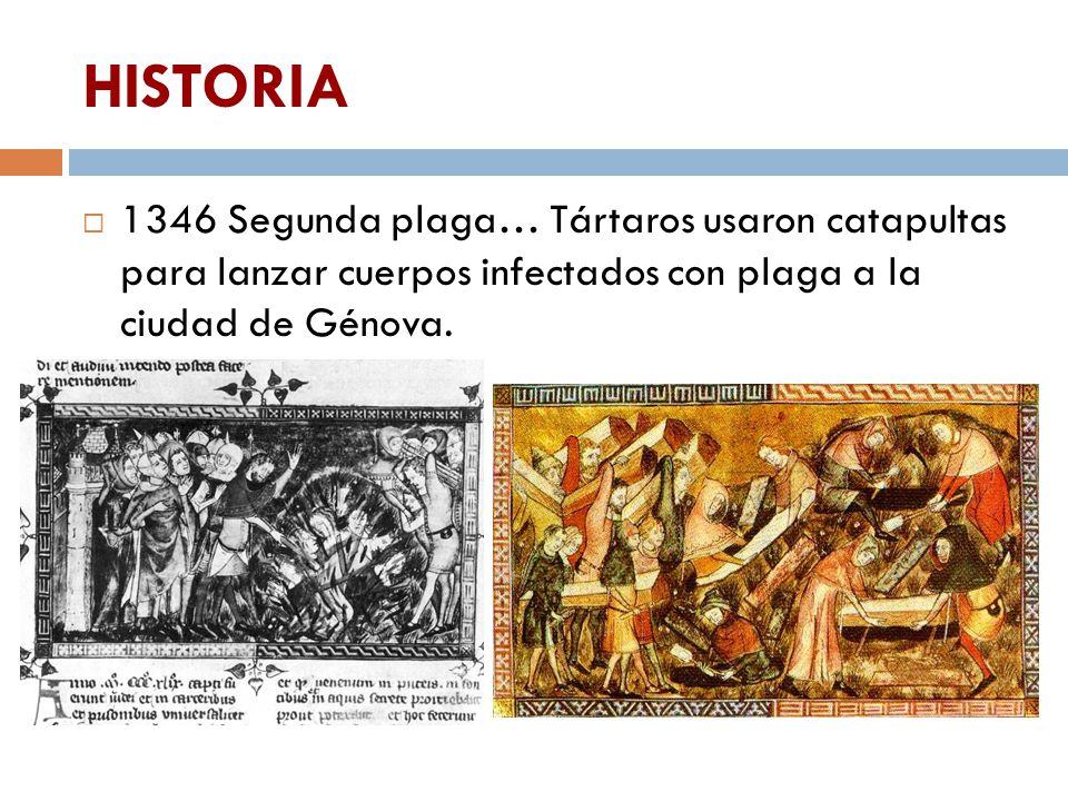 HISTORIA 1346 Segunda plaga… Tártaros usaron catapultas para lanzar cuerpos infectados con plaga a la ciudad de Génova.