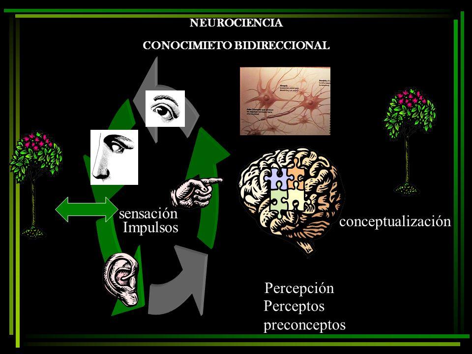 NEUROCIENCIA CONOCIMIETO BIDIRECCIONAL