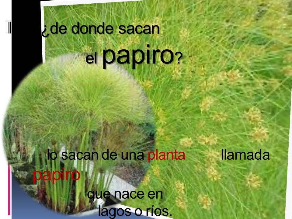 ¿de donde sacan el papiro