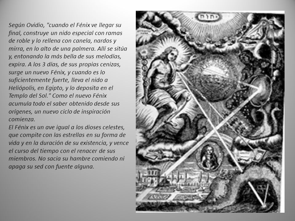 Según Ovidio, cuando el Fénix ve llegar su final, construye un nido especial con ramas de roble y lo rellena con canela, nardos y mirra, en lo alto de una palmera.