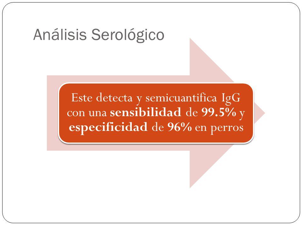 Análisis Serológico Este detecta y semicuantifica IgG con una sensibilidad de 99.5% y especificidad de 96% en perros.