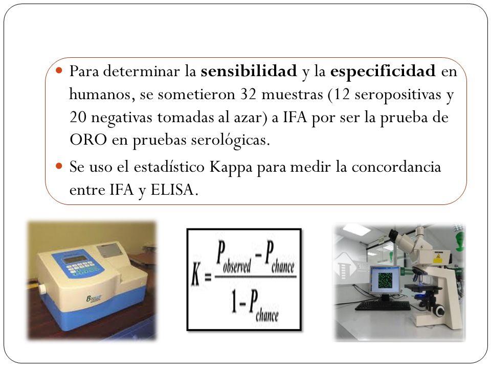 Para determinar la sensibilidad y la especificidad en humanos, se sometieron 32 muestras (12 seropositivas y 20 negativas tomadas al azar) a IFA por ser la prueba de ORO en pruebas serológicas.