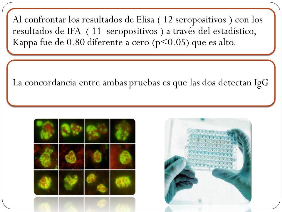 Al confrontar los resultados de Elisa ( 12 seropositivos ) con los resultados de IFA ( 11 seropositivos ) a través del estadístico, Kappa fue de 0.80 diferente a cero (p<0.05) que es alto.