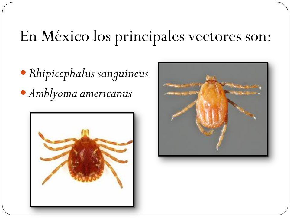 En México los principales vectores son: