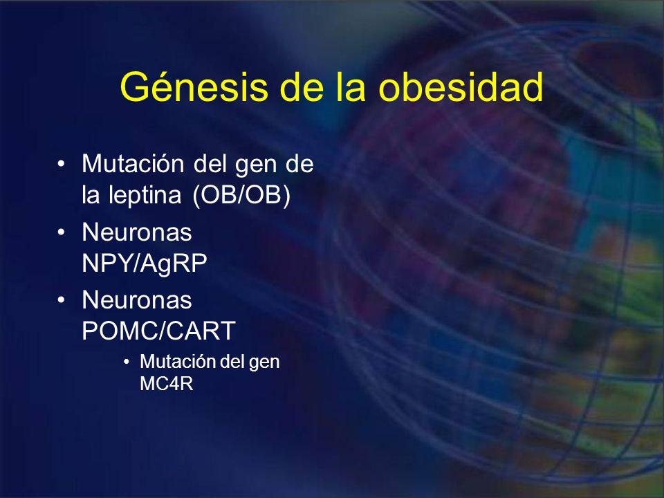 Génesis de la obesidad Mutación del gen de la leptina (OB/OB)
