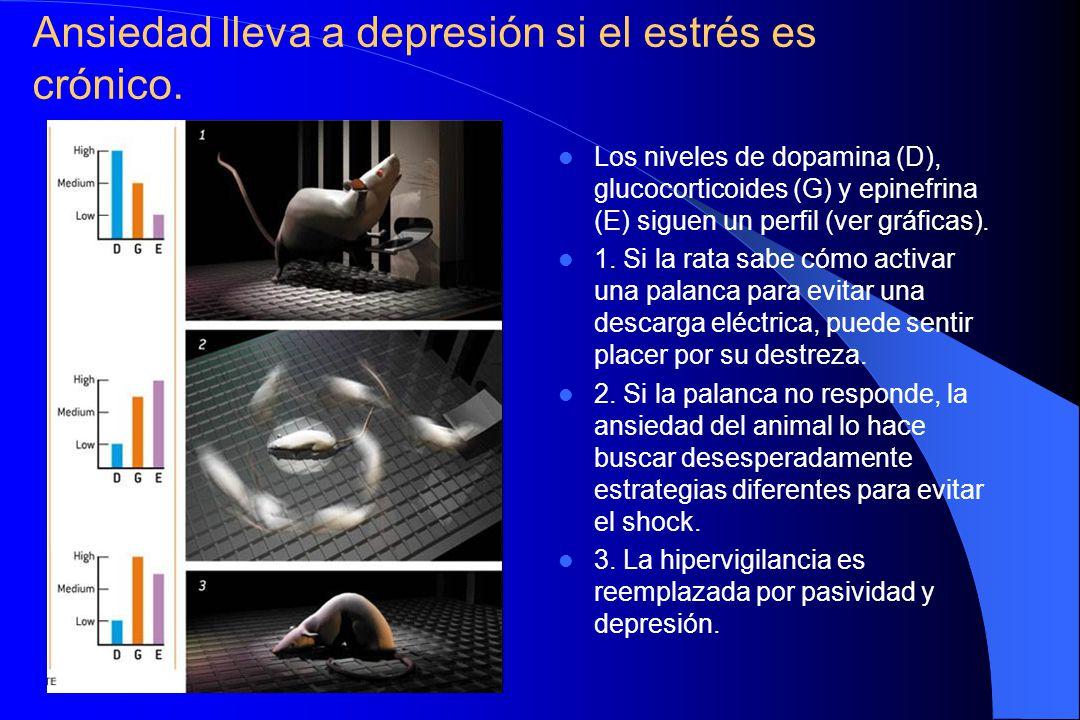 Ansiedad lleva a depresión si el estrés es crónico.