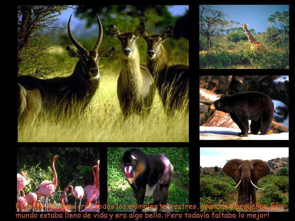 El sexto día, Dios creó todos los animales terrestres, grandes y pequeños.