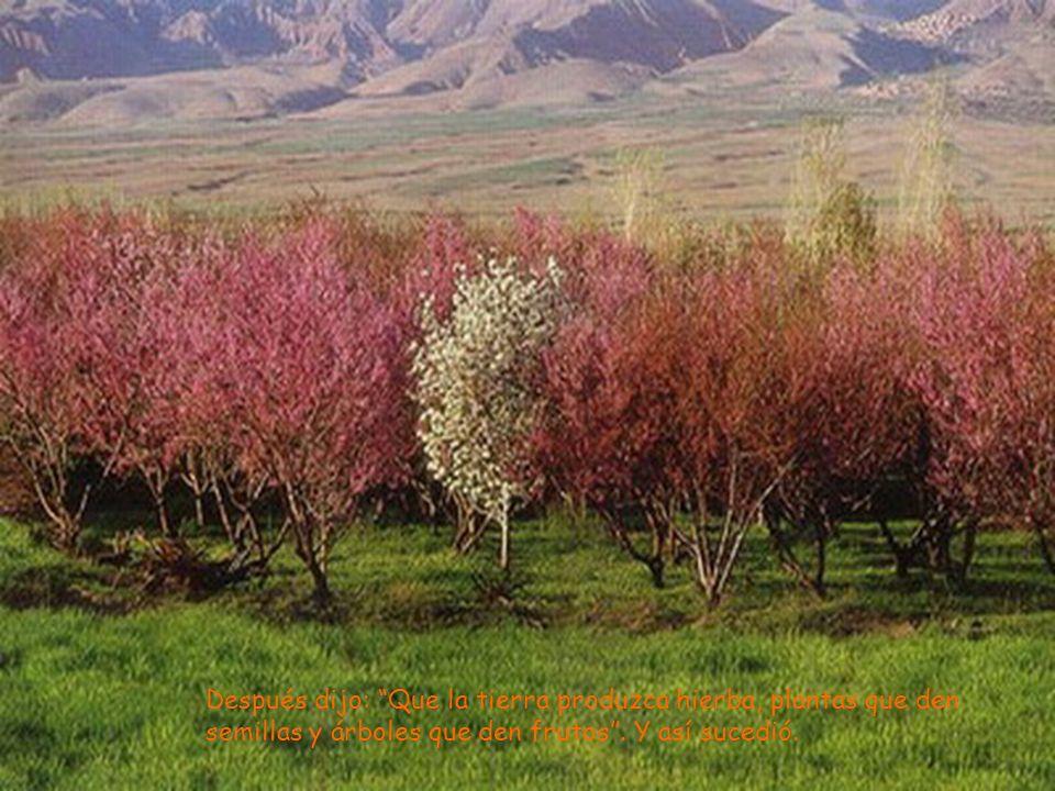 Después dijo: Que la tierra produzca hierba, plantas que den semillas y árboles que den frutos .