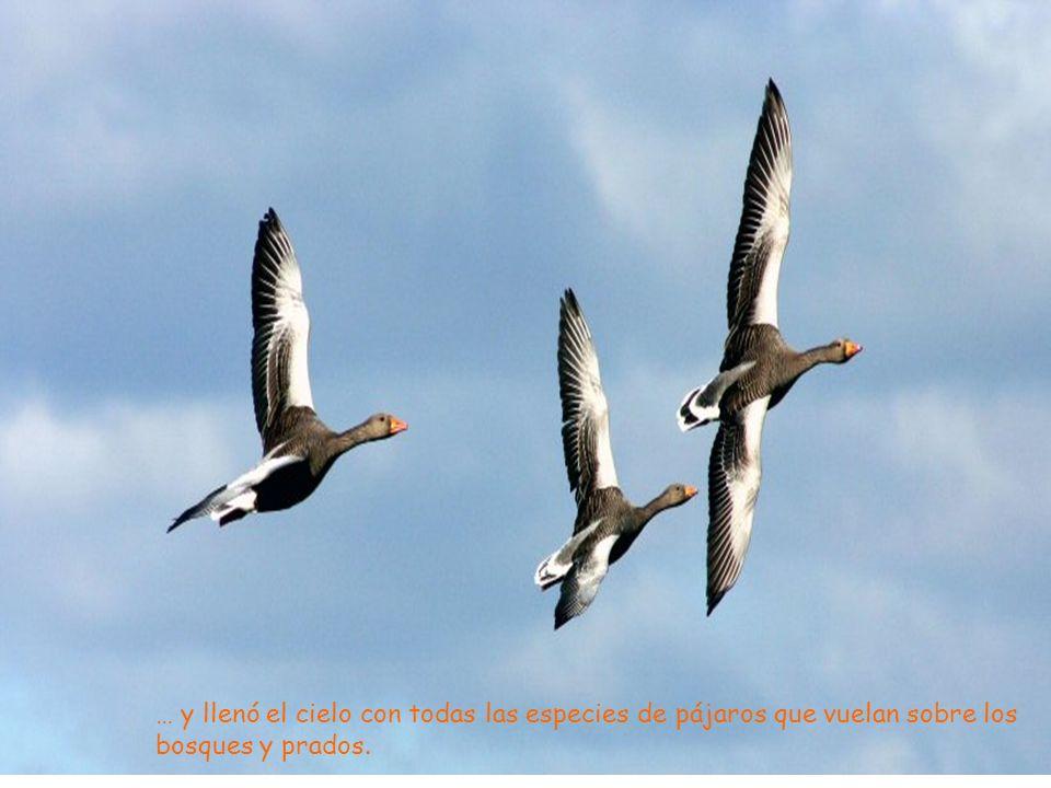 … y llenó el cielo con todas las especies de pájaros que vuelan sobre los bosques y prados.